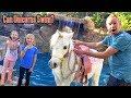 Can Unicorns Swim??