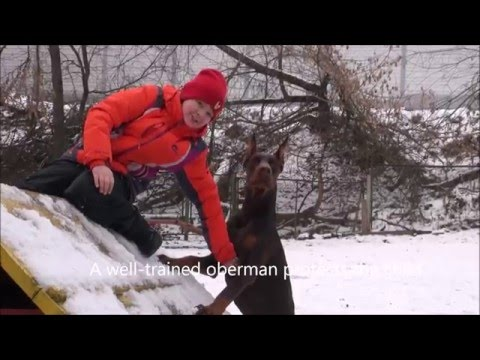 Doberman protects his kid. Dog training personal protection.