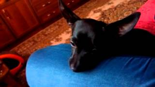 Собака грустит(Собака загрустила., 2015-11-13T21:42:37.000Z)