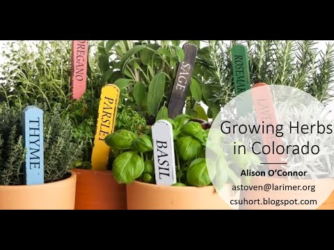 Growing and Using Herbs in Colorado