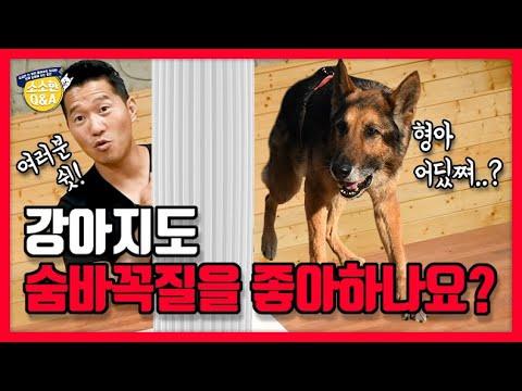 [Eng sub] 강아지도 숨바꼭질을 좋아하나요?|강형욱의 소소한 Q&A