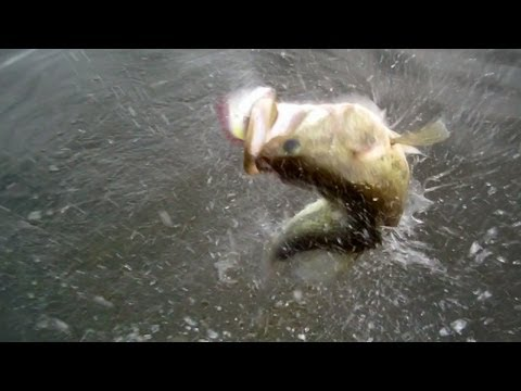 Top Water Bass Fishing With Poppers
