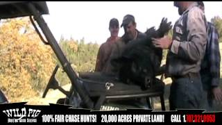 The World Hunting Club Presents Wild Pig Hunting Guide Service of Cloverdale California