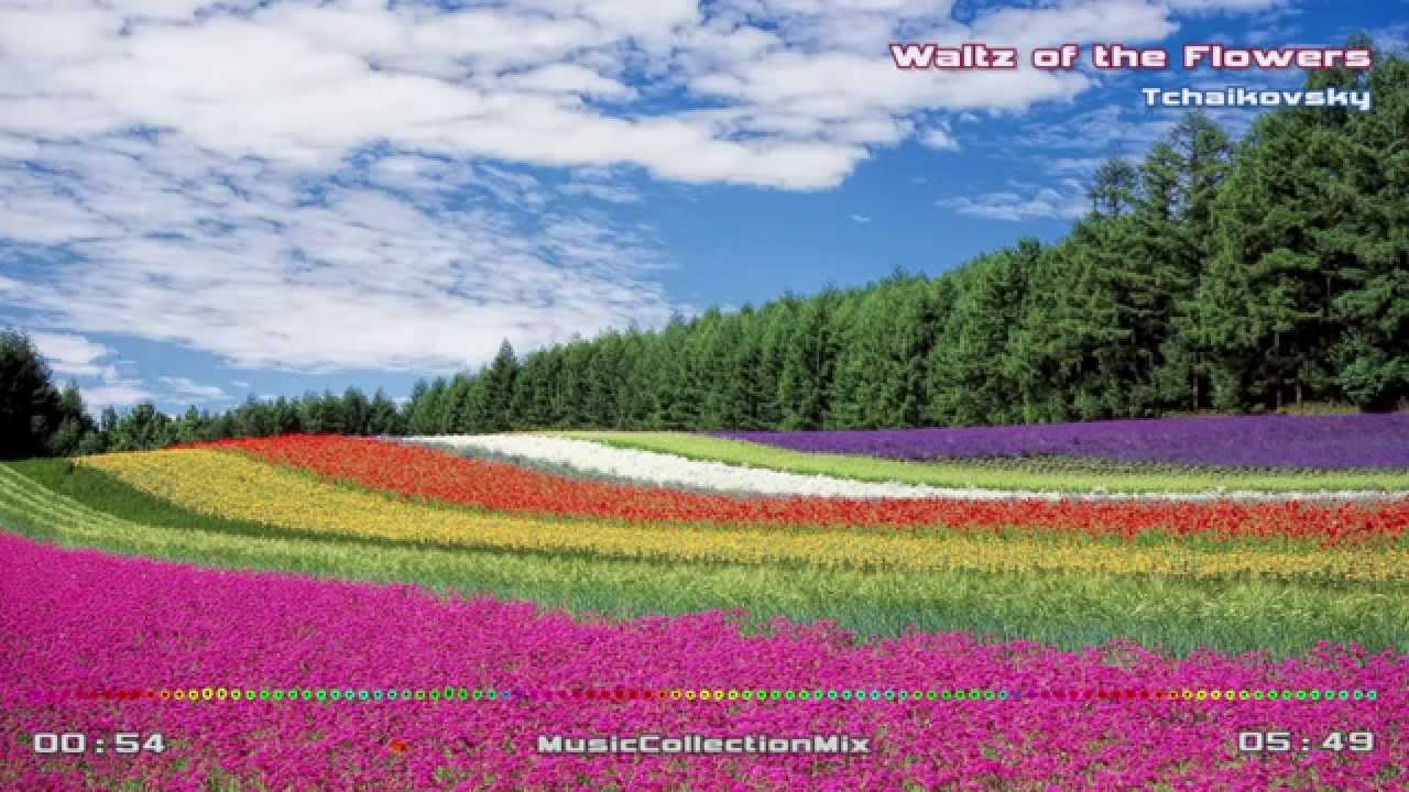 Вальс цветов минус