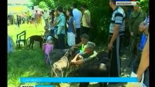 В Саранске прошла выставка охотничьих собак