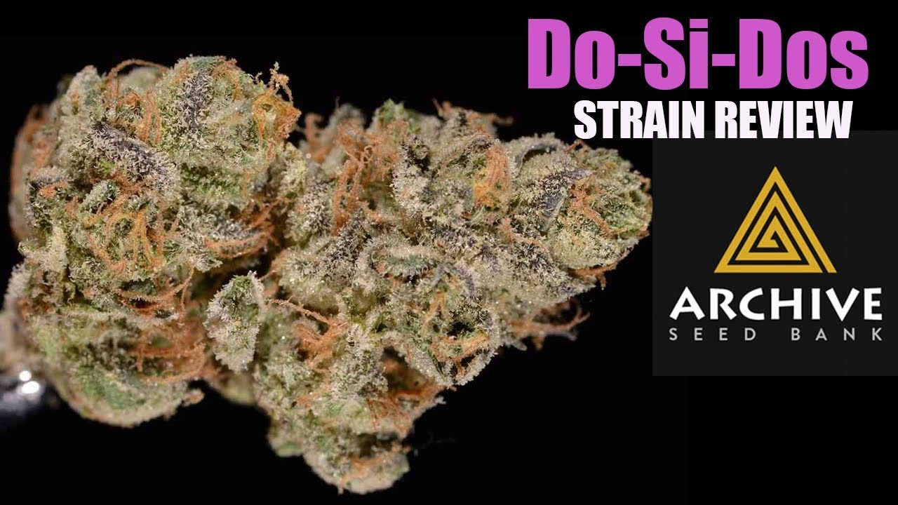 DOSIDOS WEED STRAIN REVIEW