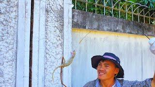 Bắt tắc kè trong khe tường, Đi tìm tắc kè khổng lồ với hy vọng đổi đời 😂 - Phần 2 (Catch Geckos)