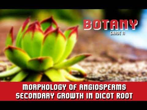 Morphology Of Angiosperms | The Anatomy | Secondary Growth In Dicot Root | Overview | Section 16