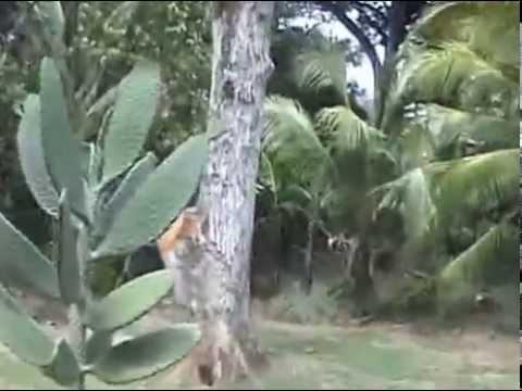 Rondreis Jamaica deel zeven