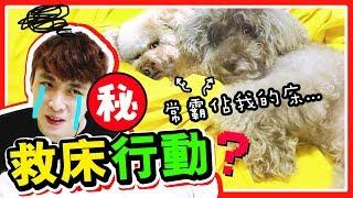 【🆘救床行動~】把狗狗的床變成「人類的睡床」🛌!?🐶Muffin 和 Brownie會喜歡嗎?最愛的竟然是「它」?(中字)
