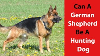 Can a German Shepherd Be a Hunting Dog: Find Out If Hunting Is a Good Fit for a GSD