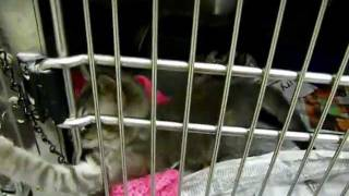 Animal Shelter. Приют домашних животных в США
