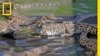 The Border Between Crocs and Humans | Explorer