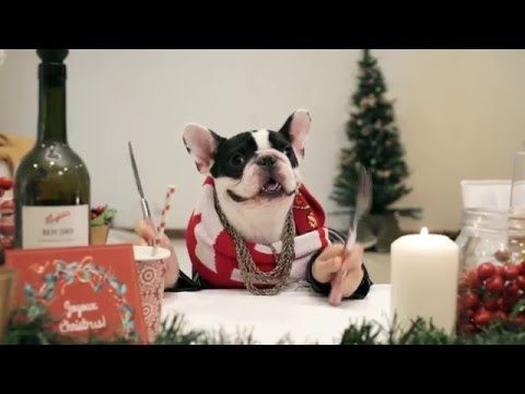 Christmas Feast - a Family of dogs eating with human hands