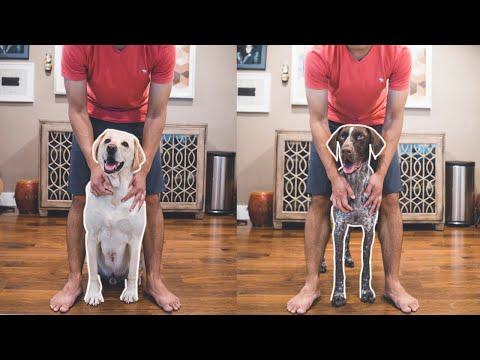 Dog tricks to teach your dog | Peekaboo