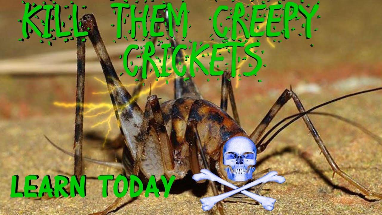 kill them creepy basement crickets now youtube rh youtube com how to get rid of crickets inside basement how to get rid of cricket spiders in basement