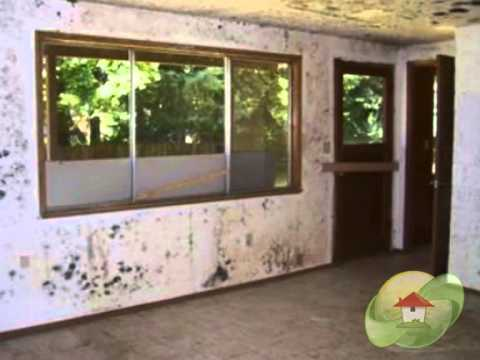 cost-of-mold-removal