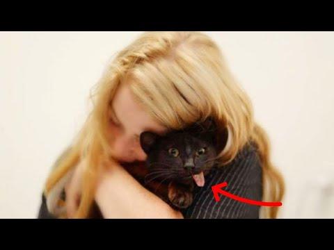 Уникальный милый котик девушка