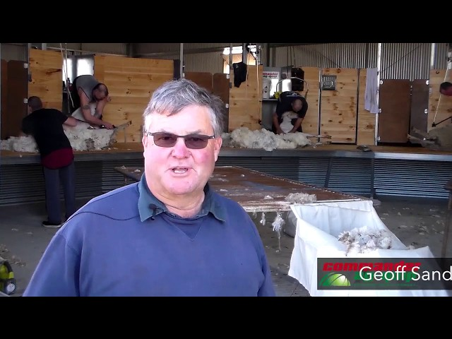 Commander Ag-Quip Shearing Shed Fit-Out and Sheep Yards- Grass Patch