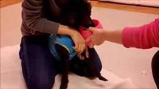診察台の上で震えてしまう犬の採血動画です。 トレーニングをしながら、...