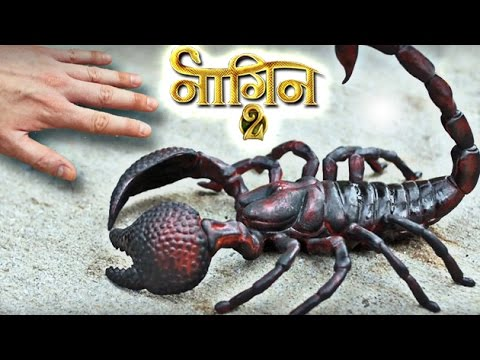 Shivangi KILLS Shesha with Scorpio- Nagin 2 | TV Prime Time thumbnail