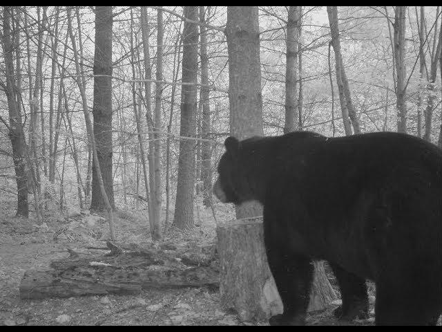 DIY Wilderness bear hunt