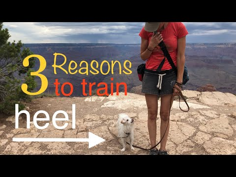 3-reasons-to-train-a-dog-to-heel