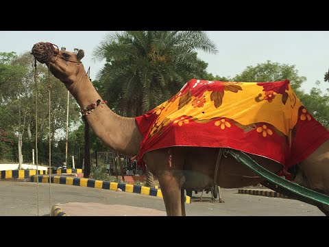 #fiyahtravels-|-india-travel-vlog