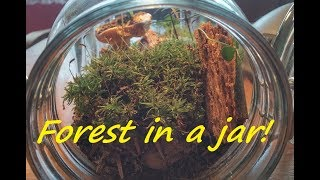 DIY Eternal Green Terrarium - Your own FOREST IN A JAR! How to do it?