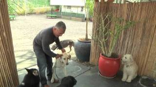 Cesar Millan Explains: Aggression During Feeding