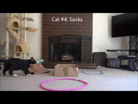Cat trap Experiment.What makes the best cat trap a paper bag box or cat circle? & Cat trap Experiment.What makes the best cat trap a paper bag box ... Aboutintivar.Com