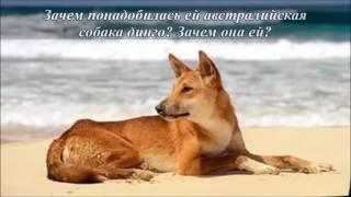 Р И Фраерман Дикая собака динго