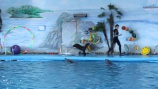 Морские котики. Дельфинарий. г.Минск(Это видео создано с помощью видеоредактора YouTube (http://www.youtube.com/editor), 2015-04-27T16:28:43.000Z)
