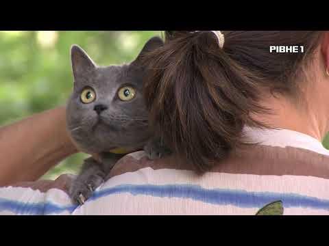 TVRivne1 / Рівне 1: Випередити сказ. На вулиці, де знайшли скажену кішку, вакцинують тварин.