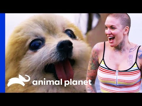 Meeting Special Needs Dogs On Their Search For New Homes | Amanda To The Rescue