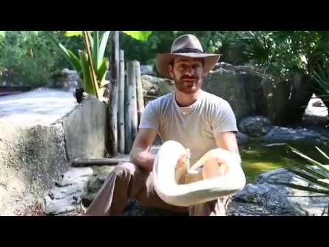 Python vs Boa Constrictor : Kamp Kenan S2 Episode 7