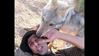 اشتياق الذئب لصاحبه شيء عجيب بعد الفراق محمد الدرويش