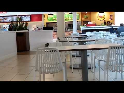 Birds Flying Around The Food Court At Jersey Gardens Mall Youtube