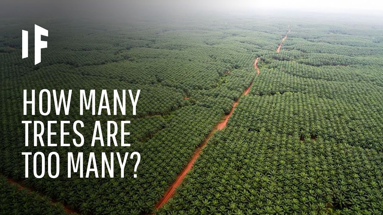 What If We Planted a Trillion Trees