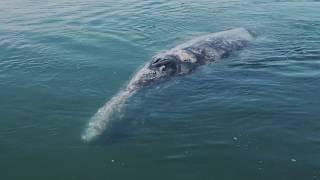 Diálogo entre una ballena y su cría