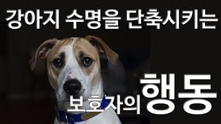 강아지수명을 단축시키는 잘못된행동 [착한애견분양]