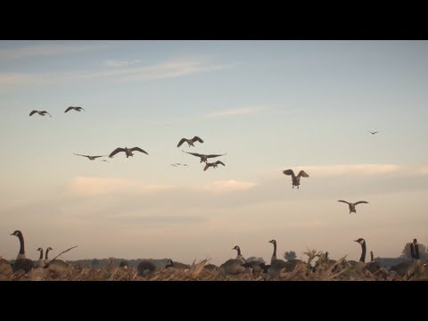 Hunting Ontario Waterfowl