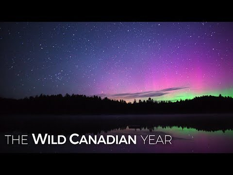 Watch Algonquin Park Come Alive at Night | Wild Canadian Year