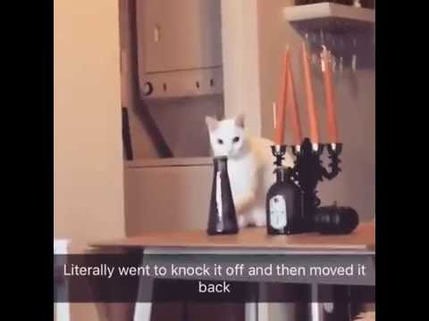 Cat moves vase to knock it off, gets caught and moves it back