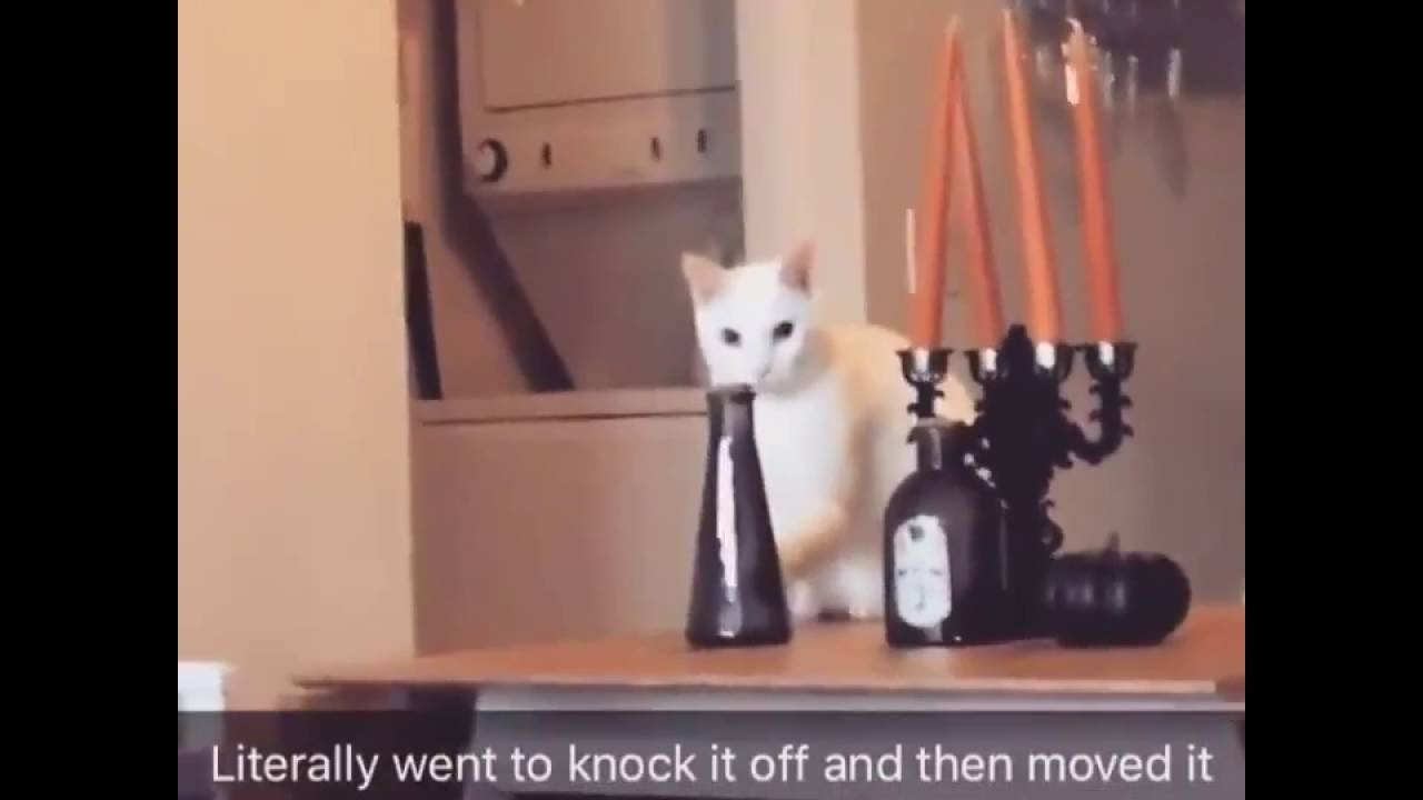 Cat Moves Vase To Knock It Off Gets Caught And Moves It Back - Sneaky cat got caught