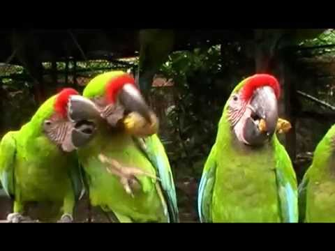 Download Three birds, one plum