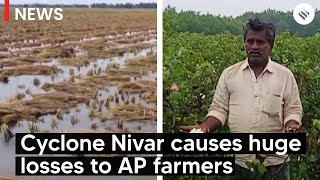 Cyclone Nivar causes huge losses to farmers in AP's Krishna