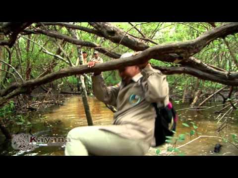 Proyecto Ecoturístico - Kayana El Espíritu del Bosque