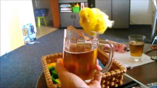 Tweetie ... Hudba: PIPES AND PINTS - Never Let You Down