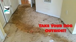 Dogs Destroyed This Rental Home - Hardest Investment Property to Clean?